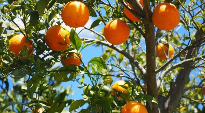 favco oranges